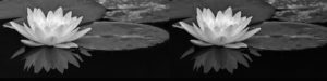Lotus4 PB