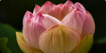 Meditação e o cultivo da  mente-coração